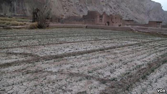نگرانی دهقانها از نبود بارندگی و خشکسالی احتمالی