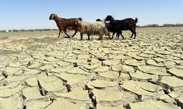 حکومت با چه طرحی به مصاف خشکسالی میرود؟