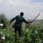 امریکا سلطان مواد مخدر افغانستان را بیسروصدا از زندان آزاد کرد