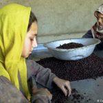 اختصاص پارک صنعتی به زنان بازرگان؛ روزنهیی برای حضور زنان در بازار اقتصاد
