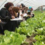 افزایش زنان کشاورز؛ بار دوش مردان نانآور کم خواهد شد؟