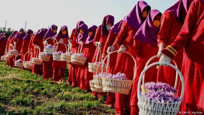 طلای سرخ و زهر سیای افغانستان؛ زعفران جای خشخاش را میگیرد؟