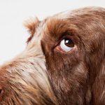 چرا سگها و انسانها همدیگر را دوست دارند؟