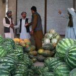 چرا میوه و سبزی افغانستان اینروزها خریدار ندارد؟