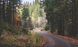 زندگی مخفی ببرک کارمل در جنگلی در چکسلواکی