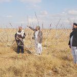 در ولایتهای هرات و بادغیس صدها جریب زمین پسته کشت شده است