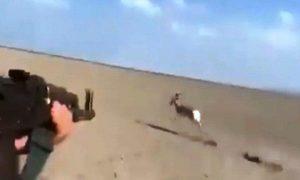 دستباز شکارچیان؛ خطر انقراض نسل حیوانات کمیاب درفراه جدی است