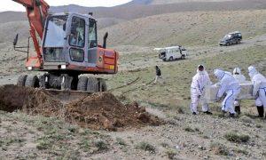 تنها یک جسد از تلفات ویروس کرونا در هرات مصئون دفن شده است