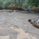 خسارات هنگفت مالی سیلاب در پنجشیر