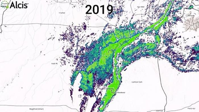 تصویر ماهوارهای از مزارع زیر کشت خشخاش در هلمند، سال 2019 (منبع: بیبیسی)