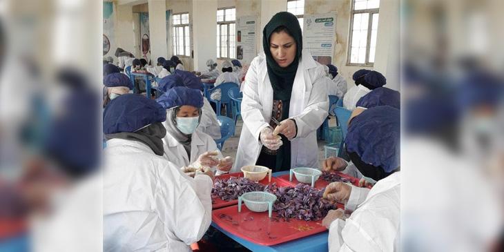 شفیقه عطایی با کارمندانش در حال پروسس زعفران؛ در فصل چیدن گل زعفران شرکت خانم عطایی برای بیش از یک هزار خانم زمینه کار را فراهم میکرده است