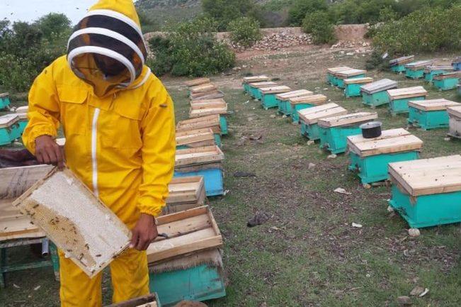 امسال در پکتیا ۹۰۰ تُن عسل تولید شده است