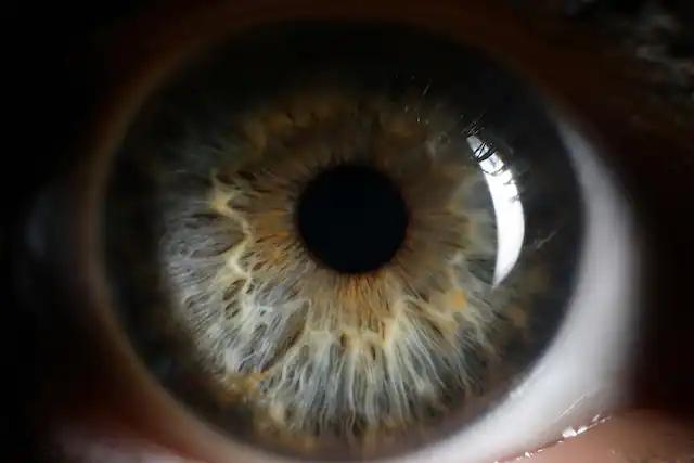 چشمها دریچهای به سوی تشخیص نشانههای زودهنگام آلزایمر و پارکینسون