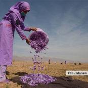 نقش موثر زنان در توسعه اقتصادی کشور