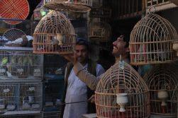 «کوچهی پرندهها»؛ روزنهی امید برای سینمای افغانستان
