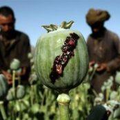 تروریسم و مواد مخدر؛ رویکرد طالبان چیست؟
